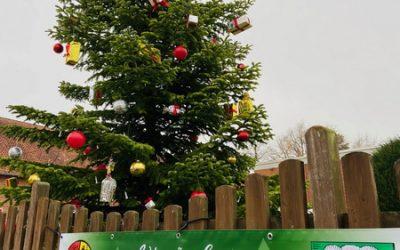 Weihnachtsbaum aufgestellt